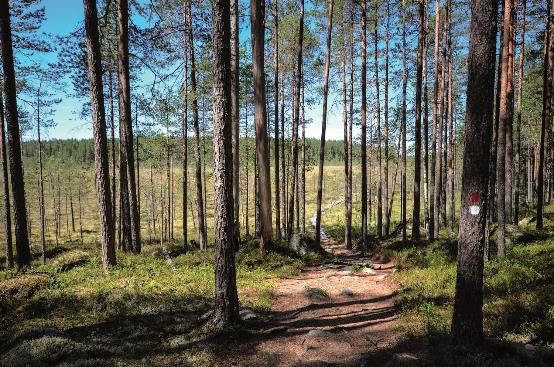 Kotajärven polkua Pyhä-Häkin kansallispuistossa. Kuva Upe Nykänen retkeilyKS P